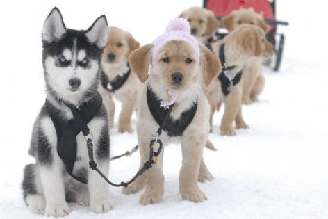cachorros en la nieve