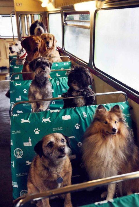 autobús para perros