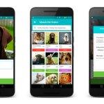 miwuki app para adoptar perros
