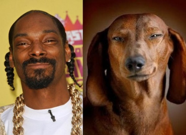 famosos parecidos a perros