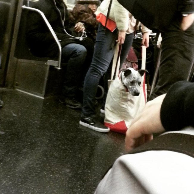 perros en metro