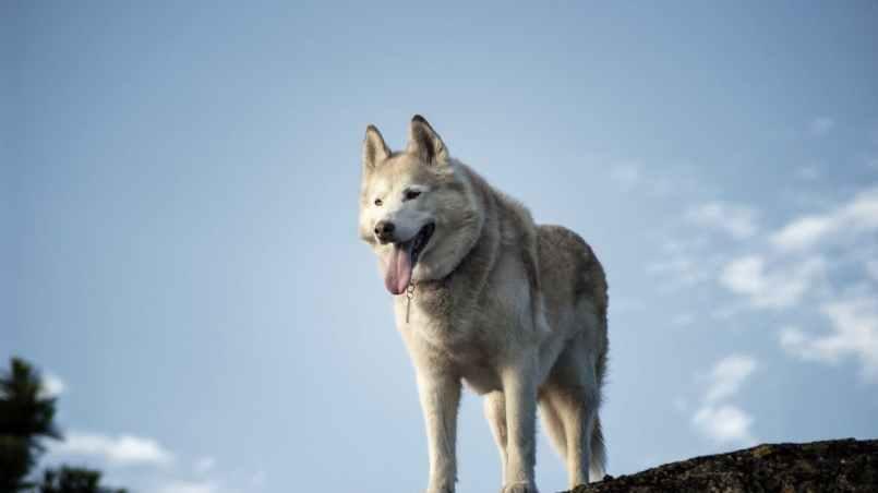 razas de perros más antiguas