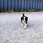 perros de chernobil