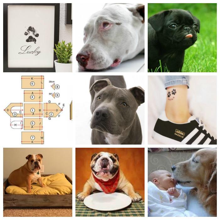 perros más pineados
