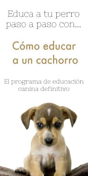Cómo educar a un cachorro paso a paso