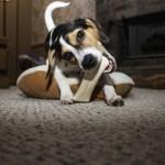 huesos prensados para perros