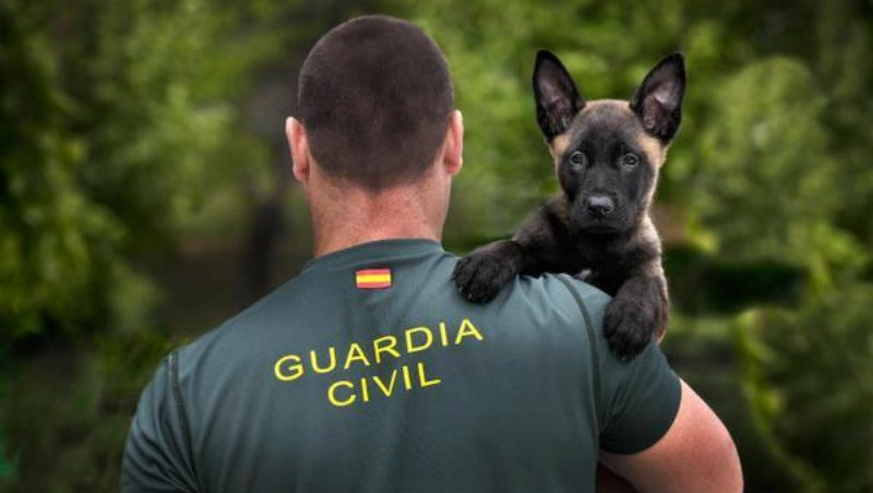 opositar para Guardia Civil