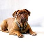 cuidados de las razas de perros