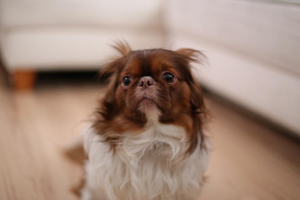 Las 10 fobias más comunes en perros