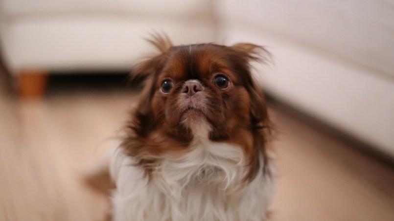 fobias en perros