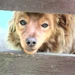 albergue abre sus puertas a perros