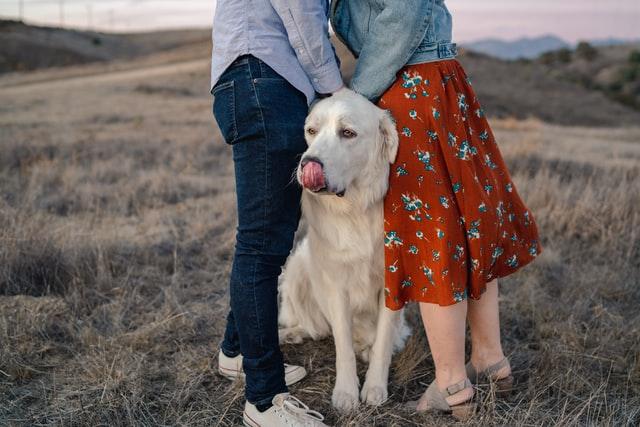 razas de perros afectuosos
