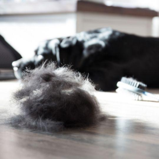 muda de pelo en perros