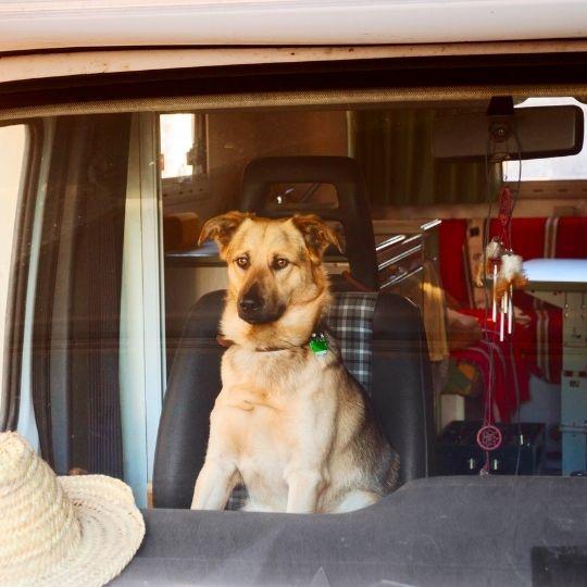 viajar en autocaravana con perro