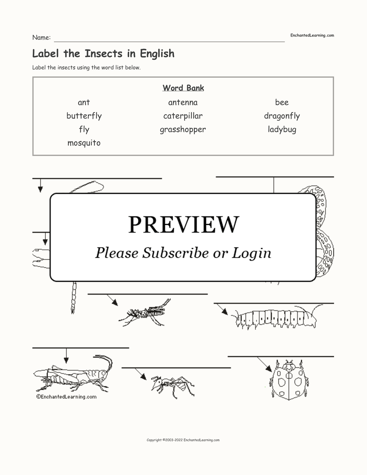 Label The Insects In English