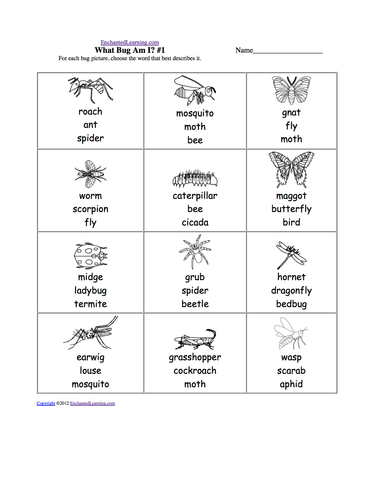 Spelling Worksheets Insects At Enchantedlearning