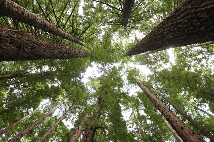 Warburton Redwood Forest Melbourne Skyview