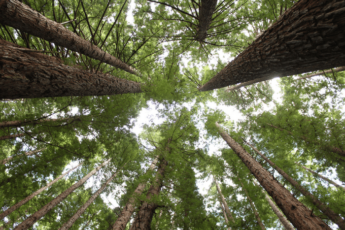 Warburton Redwood Forest Melbourne Skyview
