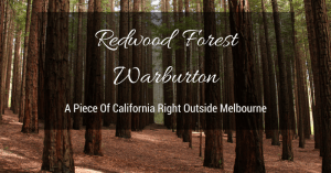 Warburton Redwood Forest