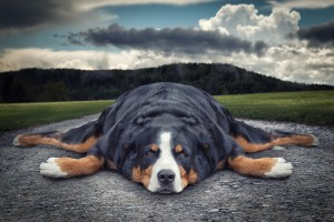 Picture of exhausted dog