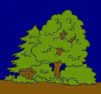 bosque dibujado