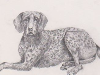 Cuentos de perros. Cuentos de animales