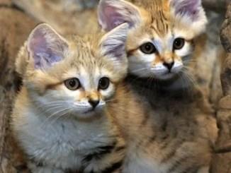 cuentos cortos de gatitos