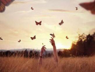 La cazadora de mariposas
