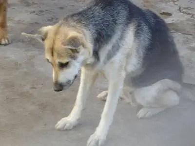 cuentos sobre perros abandonados