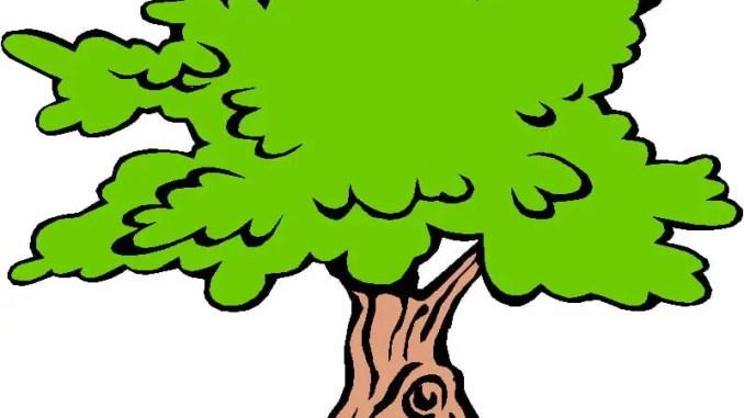 Sobre un árbol