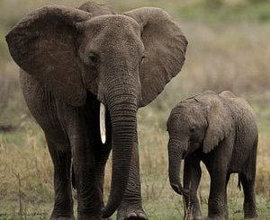 cuentos infantiles de elefantes
