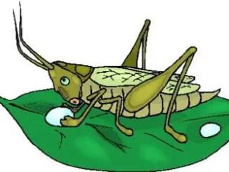 Cuento de insectos