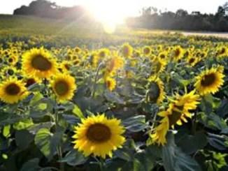 Poesías cortas sobre el campo