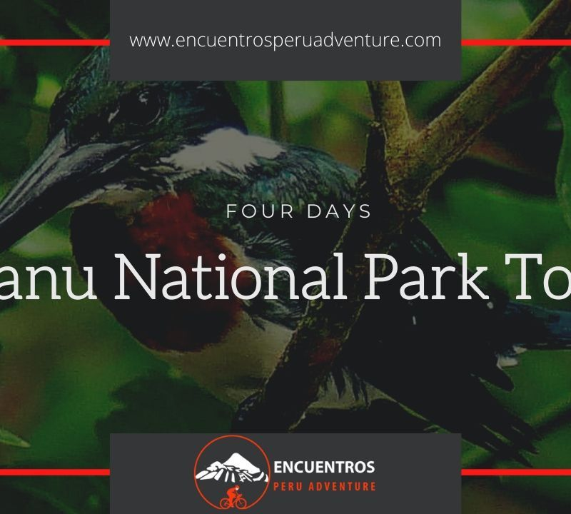 Manu National Park Tour
