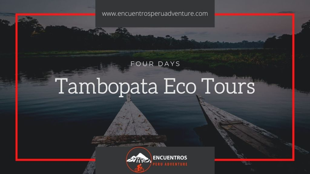 Tambopata Eco Tours
