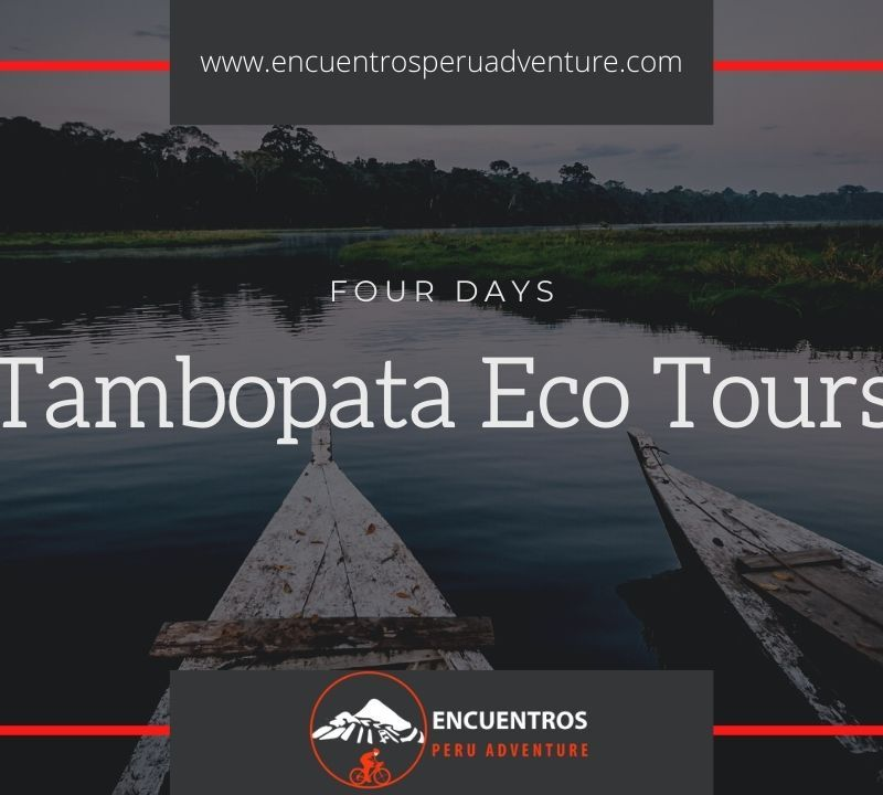 Tambopata Eco Tours
