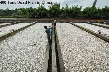 400 Tons Dead Fish China
