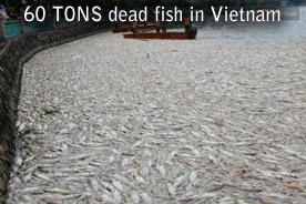60tons morts vietnam de poisson