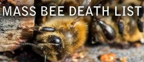 Worldwide Bee Die offs