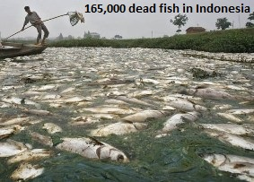 Dead Fish in Bantul
