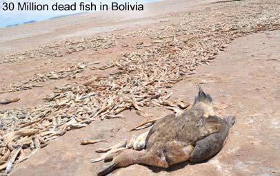 Dead Fish in Bolivia