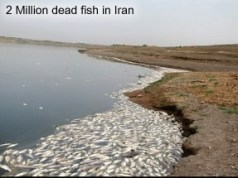 Dead fish in Iran