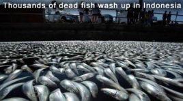 Dead Fish in Jembrana