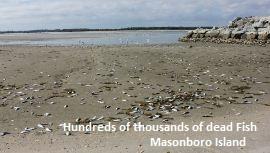 Dead Fish Masonboro