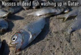 Dead Fish in Qatar