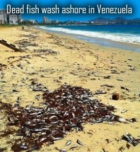 Dead fish in Venezuela