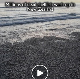 Dead shellfish new zealand