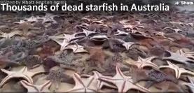 Dead starfish in Australia