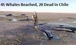 Dead Whales Chile