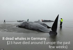 Dead whales in Germany